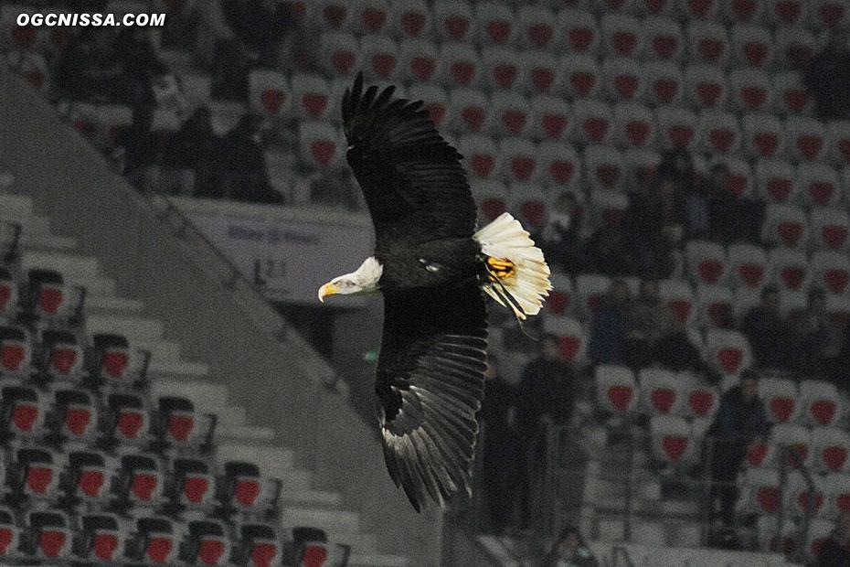 L'aigle Méfi