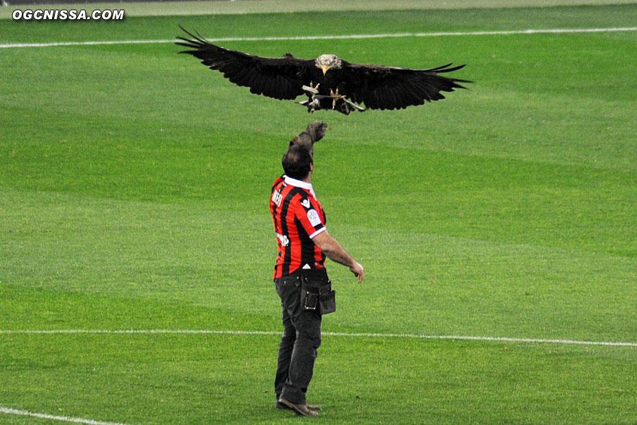 L'aigle Mefi avant le match